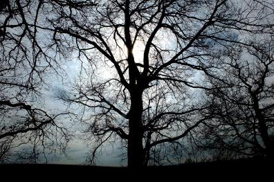 """"""" Si vivre se limitait à exister pour soi, qu'aurais-je de plus que les arbres qui se dénudent en hiver et se couvrent au printemps tandis que je fais l'inverse ?. L'Equation Africaine """" - Yasmina Khadra -"""