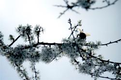 SELF - Nature 2
